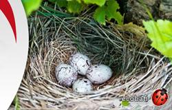 L'isolant naturel en chanvre bio fib une valeur sûre et une isolation naturelle durable et belle