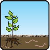 Paillage naturel mulch pour le jardin - Ecorce de chanvre ...