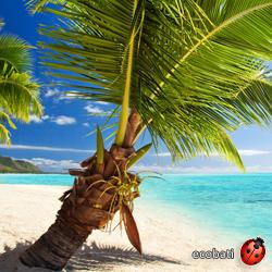 Nouveau un plancher cocotier pour terrasse ext rieure for Plancher pour terrasse exterieure