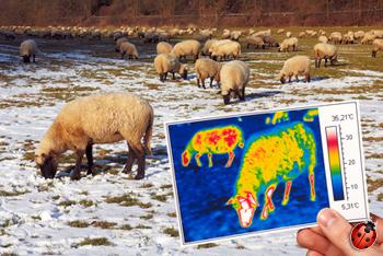 naptural bati-mouton pourquoi