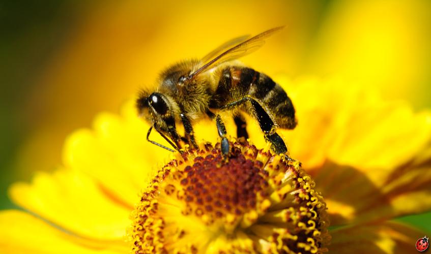 cire liquide d'abeille pour traiter le bois et entretenir son éclat - ecobati