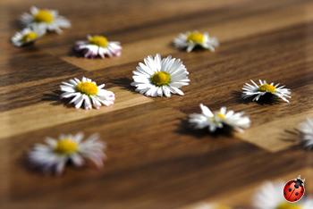 huile dure pour bois fleuri ecobati