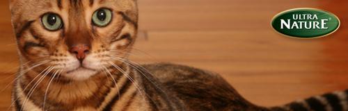 bois chat douceur ecobati parquet huile dure