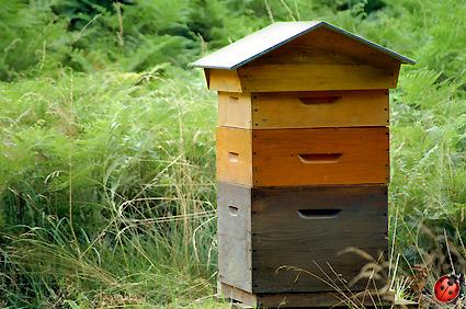 lasure boiseries sur ruches extérieur ultranature